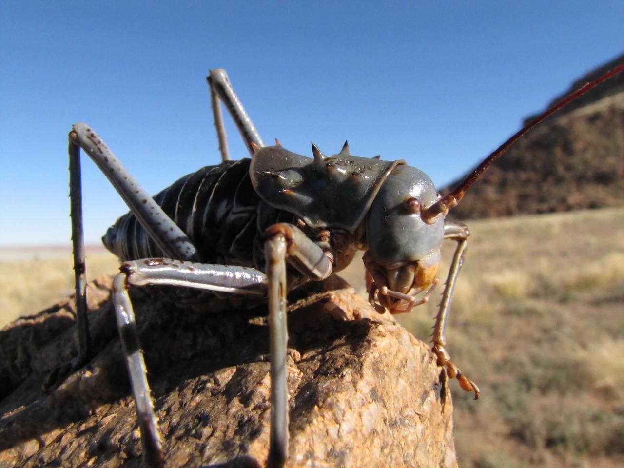 Бронированный кузнечик: Адские животные Африки. Киборг-убийца с отравленной кровью!