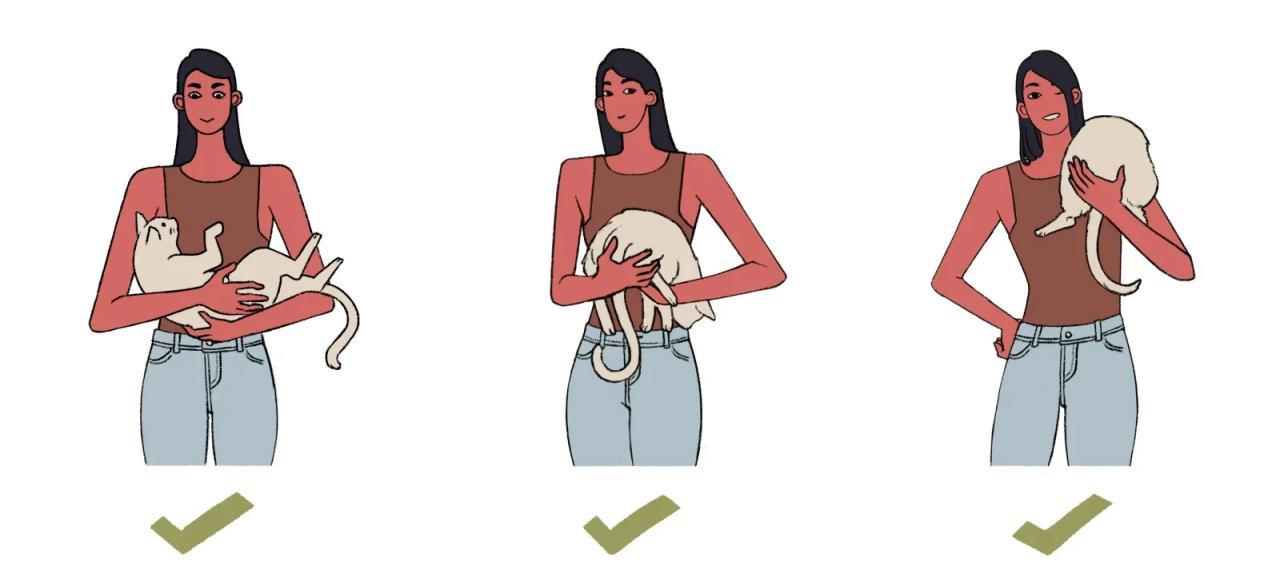 Почему нельзя брать животных за шкирку?
