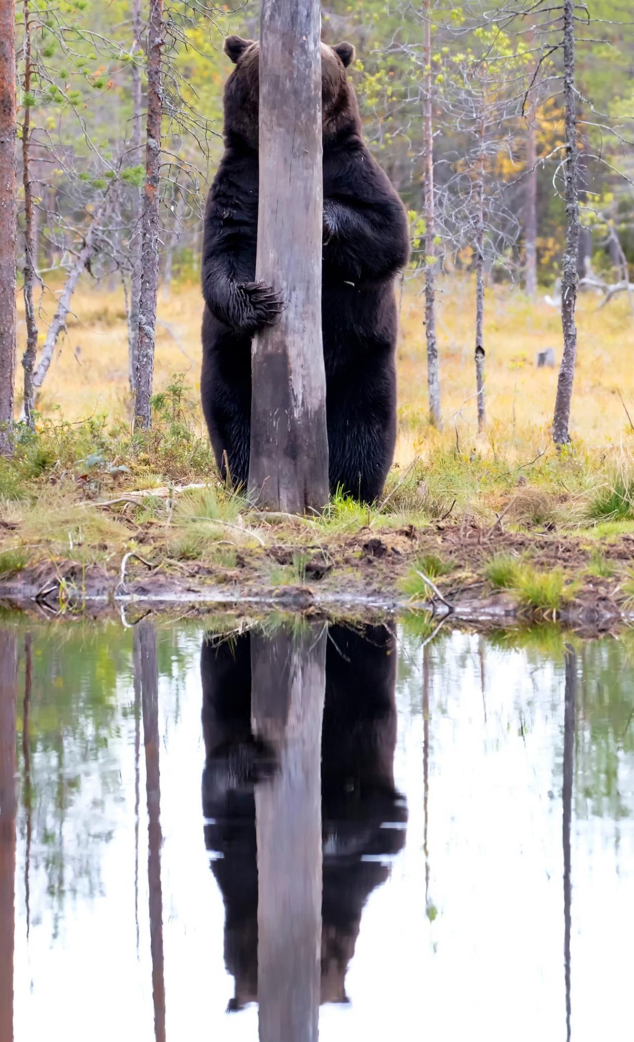 Финалисты премии Комедийной фотографии дикой природы 2020 года выглядят как отличные заготовки для мемов