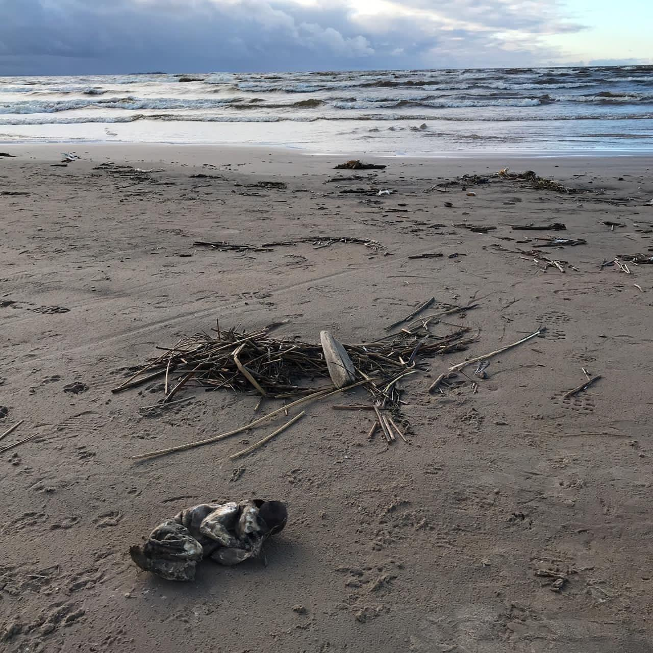 На берегу Финского залива было обнаружено непонятное существо