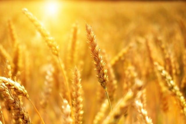 10 смертельных катастроф, связанных с продуктами питания