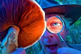 Неудавшийся эксперимент с галлюциногенными грибами