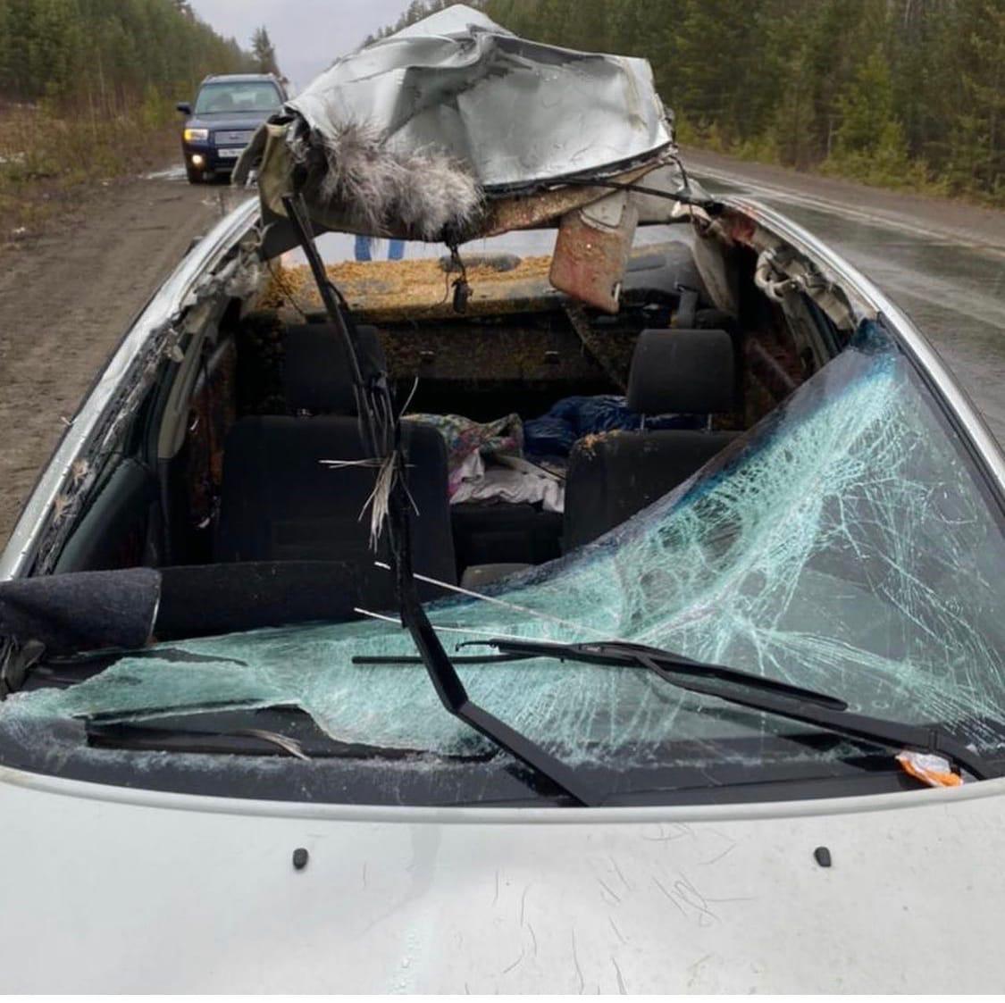 Водитель сбил лося, потерял автомобиль и должен 80 тысяч