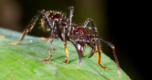 10 существ, укусов которых стоит избегать