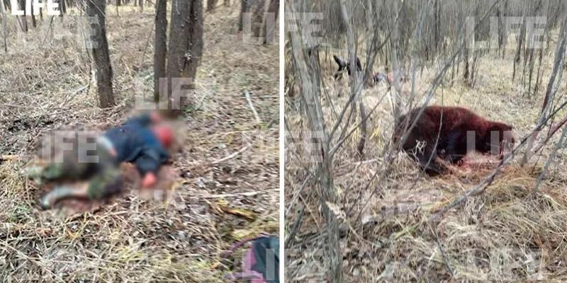В тюменском лесу медведь напал на рыбаков. Один мужчина погиб, второй зарезал зверя ножом, но сам попал в реанимацию