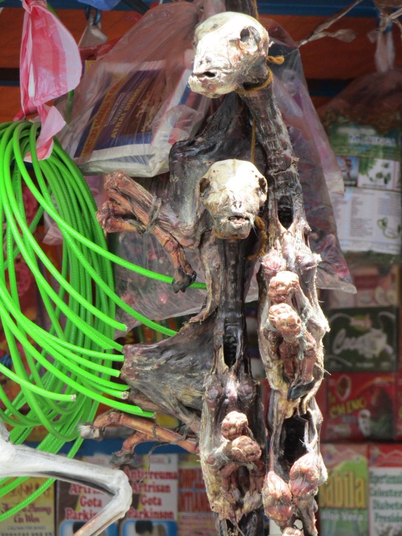 Бешенные псы в Боливии