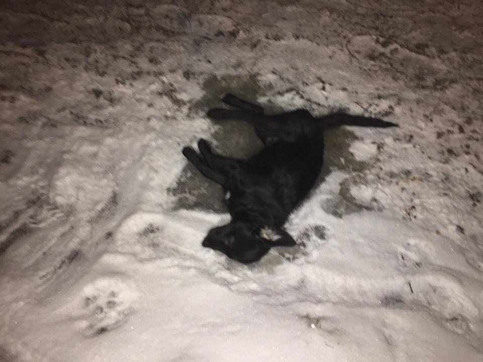 Щенок погиб после того, как хозяин выкинул его из окна. Собака грызла мебель.