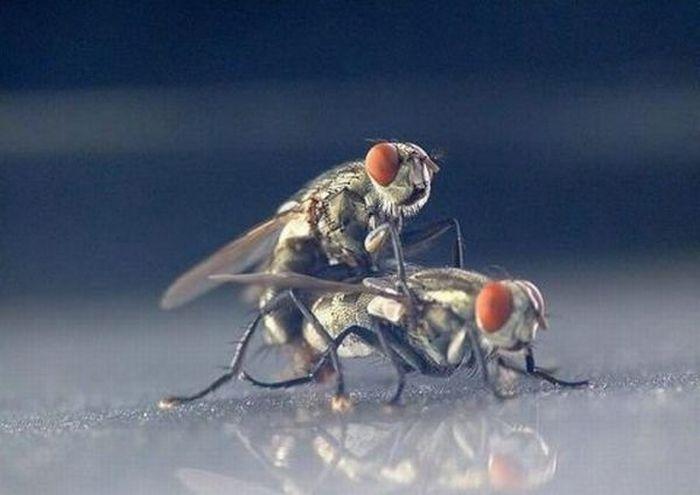 Автомобильный секс на природе (6 фото НЮ). автосекс, мухи.