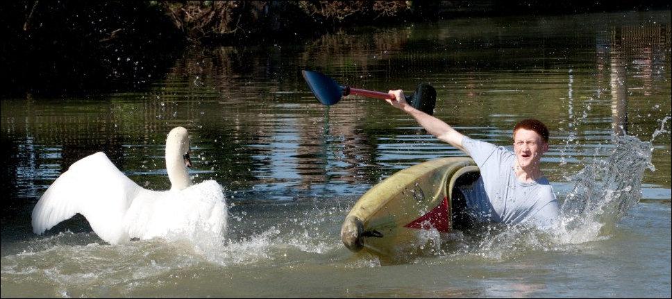 лебедь около плывет злого коршуна клюет найти функциональные омонимы