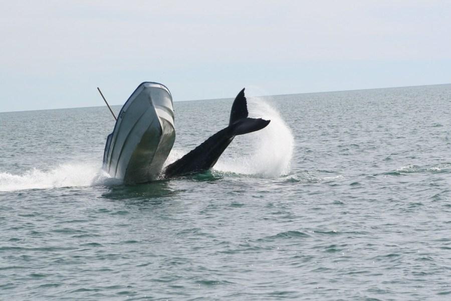 сонник выпрыгнуть из лодки