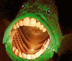 Поющие в аквариуме