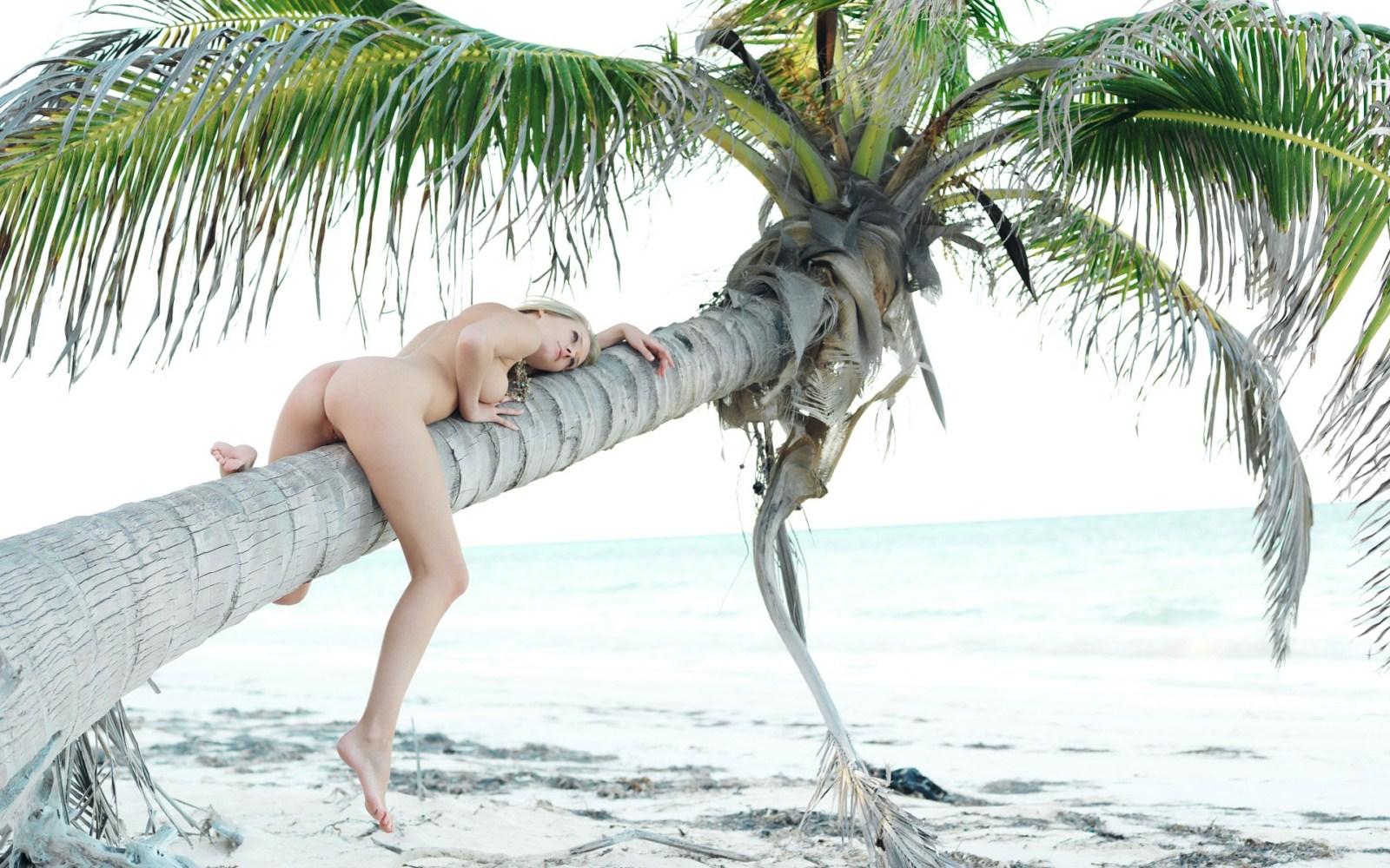Секс пальмы у моря 16 фотография