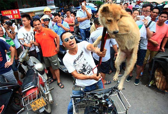 Порода собаки которую едят какую собаку едят в корее