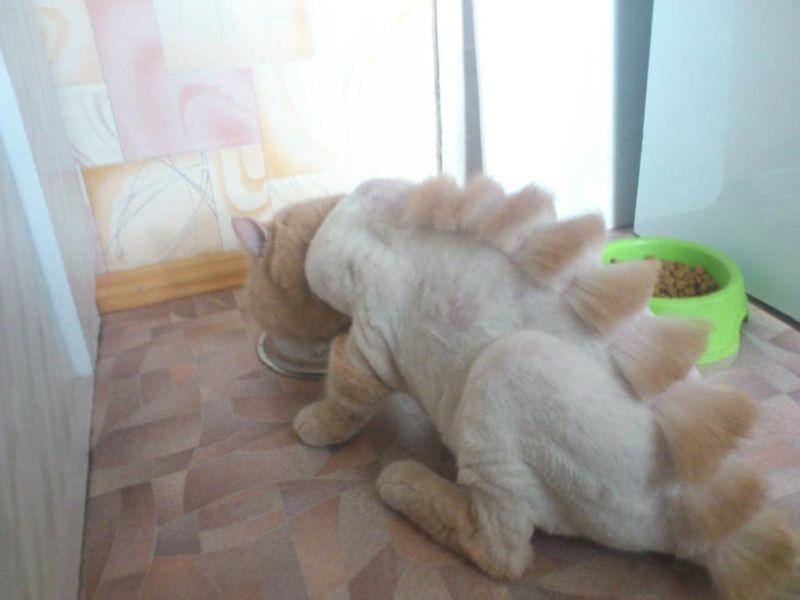 Как из кота сделать динозавра.